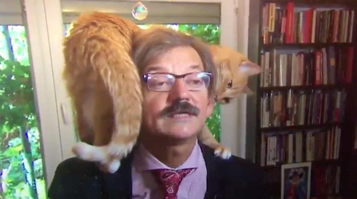 Professor's cat climbs onto his head in TV interview class=
