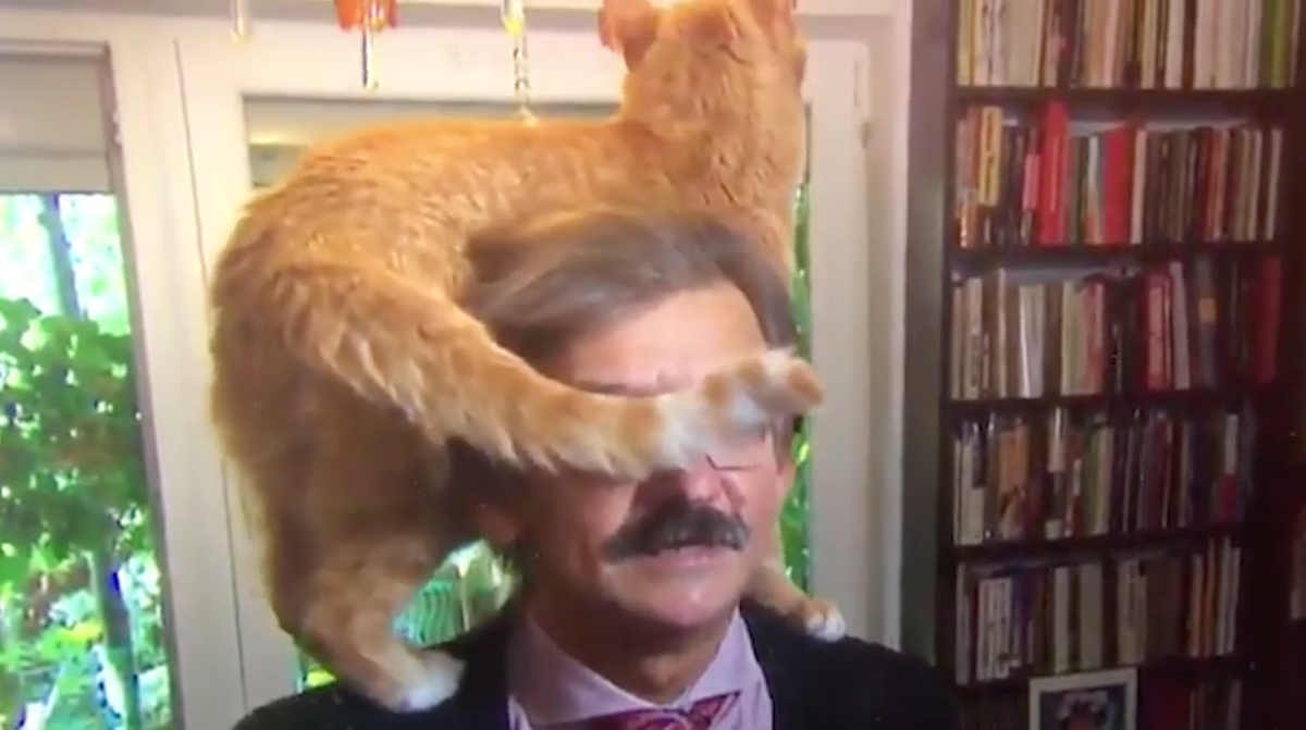 Political Commentator Continues TV Interview, Unfazed by Cat Jumping on His Head