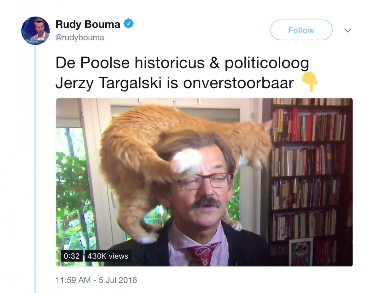 Cat upstages serious historian during TV interview