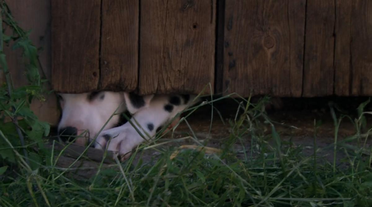 Emmerdale viewers left in tears by heartbreaking puppy farm scenes