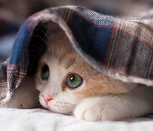 ATTENTION: Scientists warn that cuddling kittens could KILL you!
