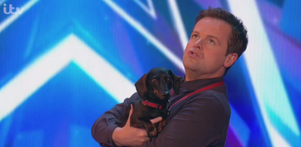 BGT audience in hysterics as a YOGA DOG dog WEES in judge's shoes
