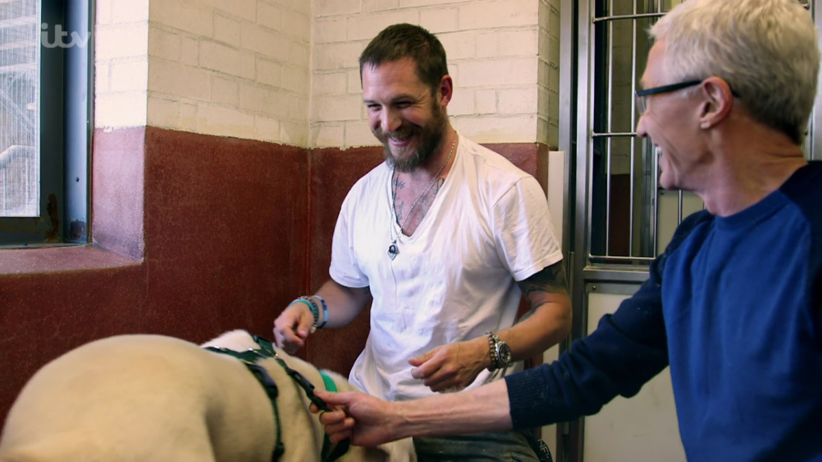 "Tom Hardy appears on 'Paul O'Grady: For the Love of Dogs' He tell Paul ""I've come in for therapy really, for me! It's here and it's round the corner and I've come to hang out. They let me come in to see the dogs and to give them a cuddle."" Broadcast on ITV1 HD PersonInImage : Tom Hardy,Titch,Paul O'Grady"