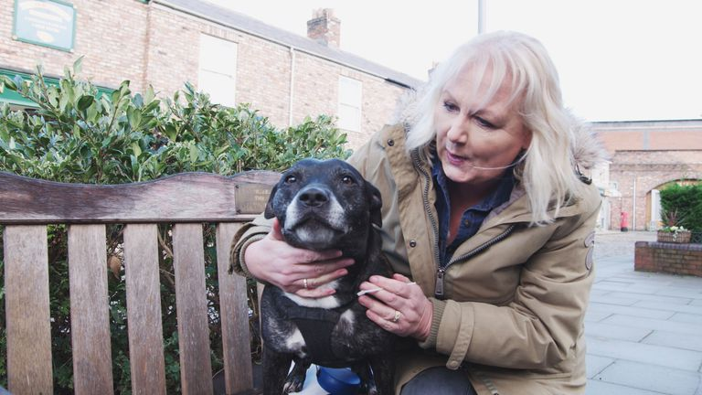 britains top 100 dogs live Sue cleaver