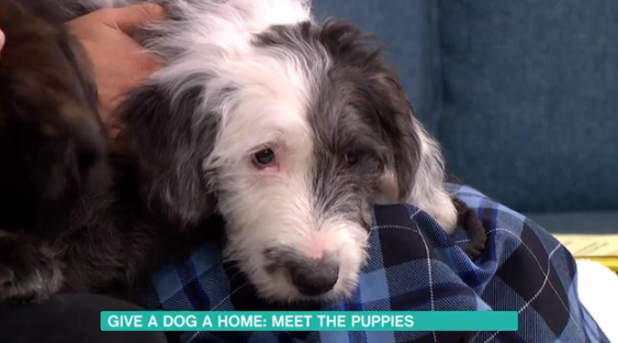 Dog hoping to be re-homed on This Morning