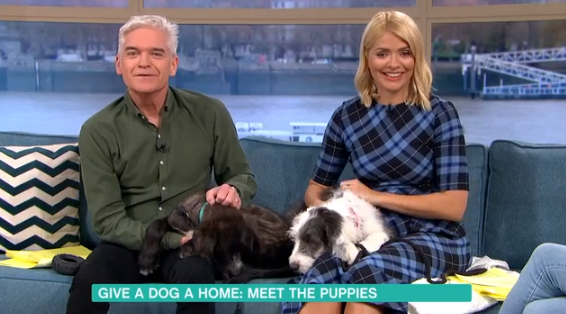 Holly Willoughby fights back tears after meeting puppy in need of re-homing