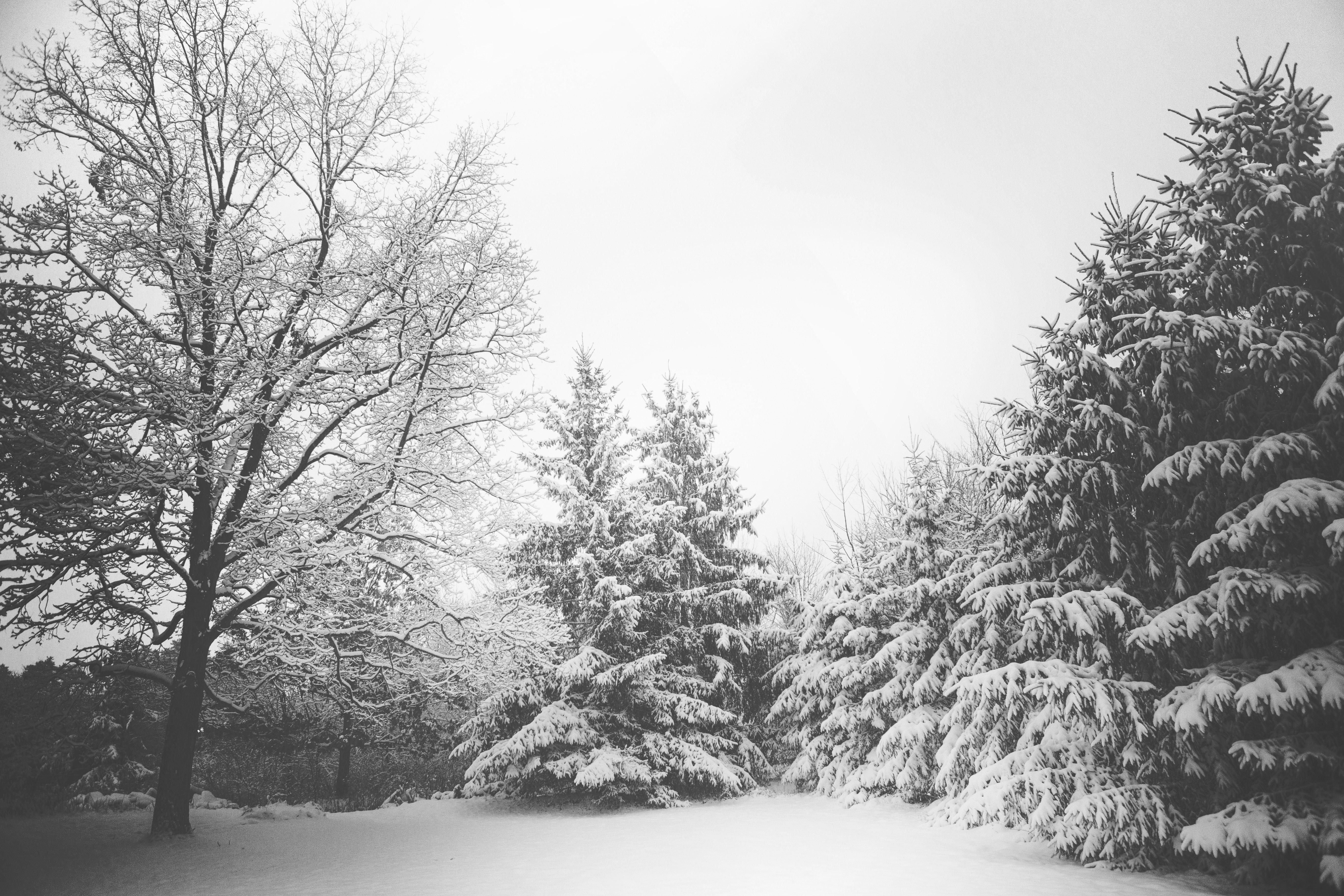 Snow (Credit: www.pexels.com)