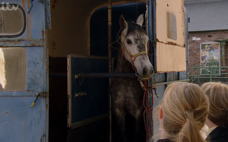 Coronation Street viewers fed up with 'silly' horse plot