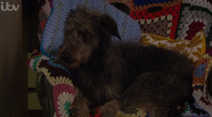 Emmerdale fans call for Monty the dog to win awards after reaction to Zak and Faith's kiss