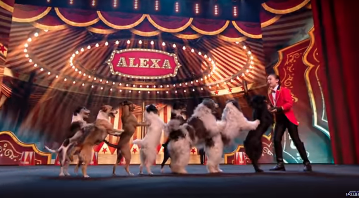 Britain's Got Talent viewers amazed by dogs who can do the CONGA!