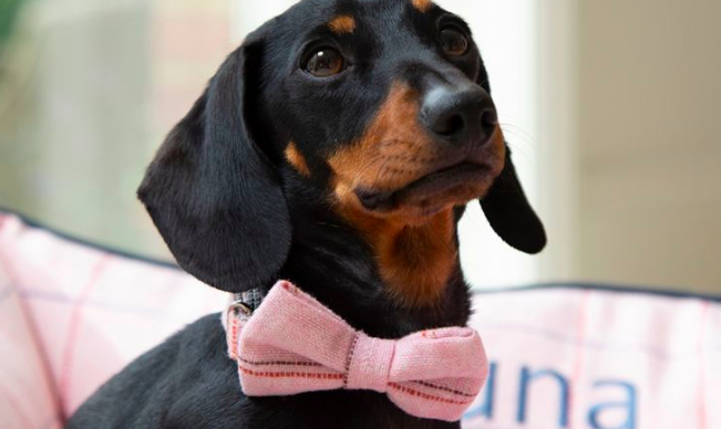 https://www.my1styears.com/personalised-dog-bow-tie.html