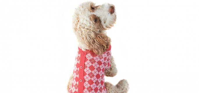 B & M is selling the cutest dog cardigans for Christmas