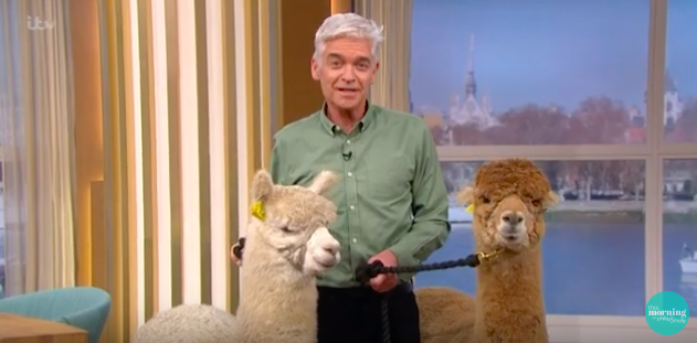 Angry This Morning alpaca guest spits in Phillip Schofield's face
