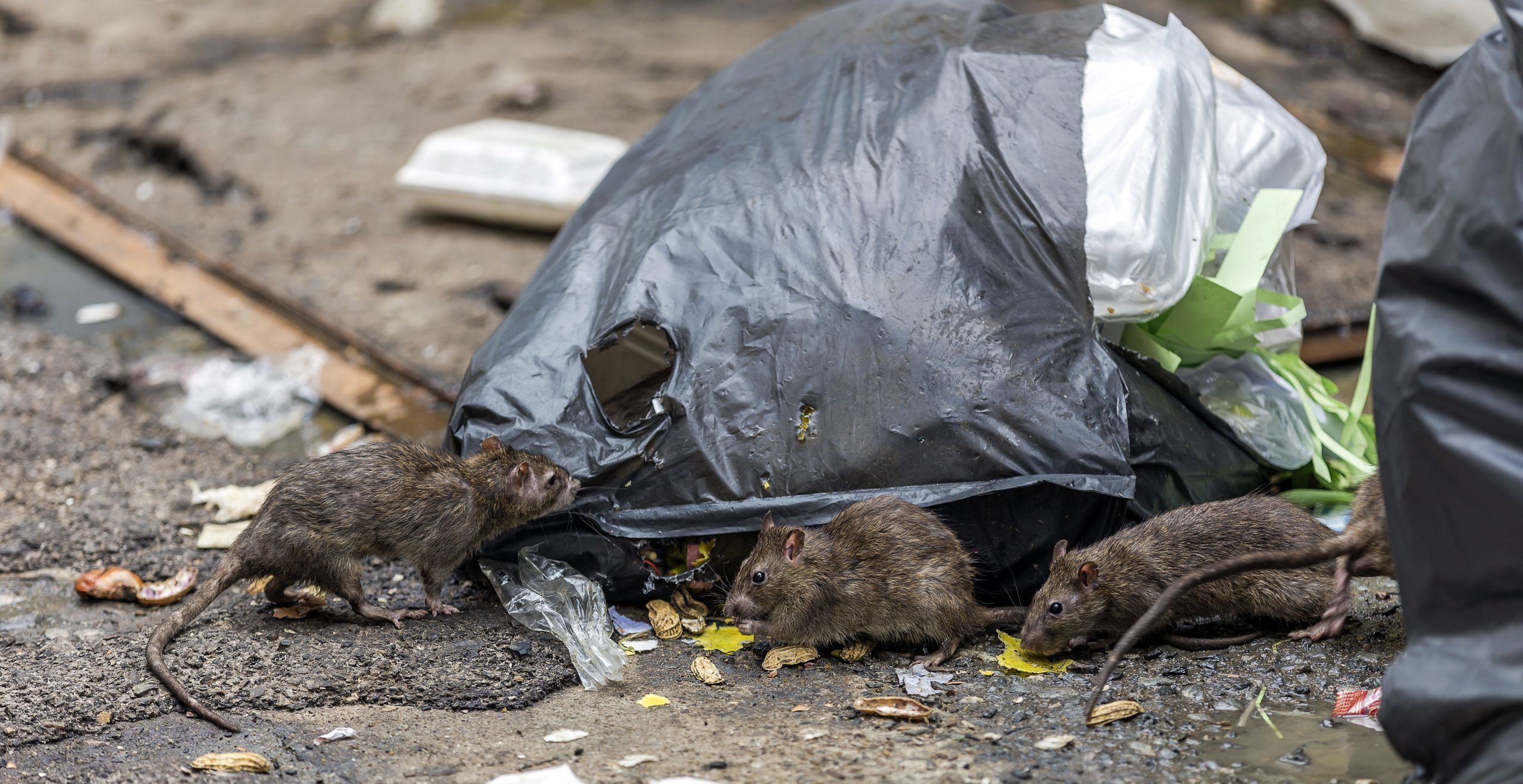 Coronavirus: Stockpiling Brits slammed for dumping food amid fears of a rat invasion