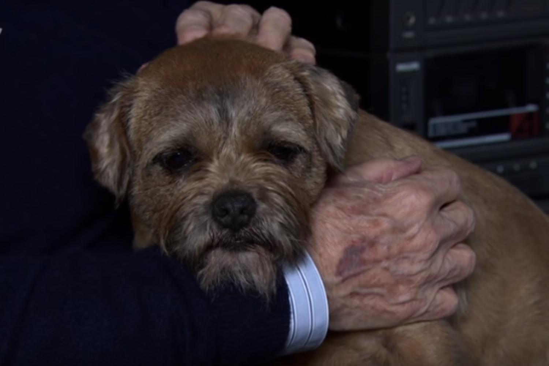 Coronation Street viewers heartbroken as Eccles the dog dies
