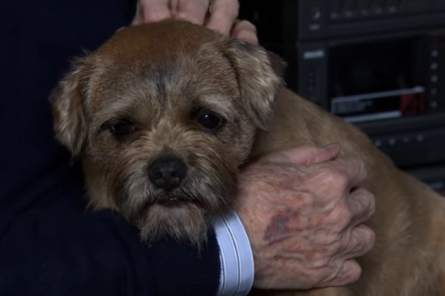 Coronation Street reassures fans the dogs playing Eccles are still alive