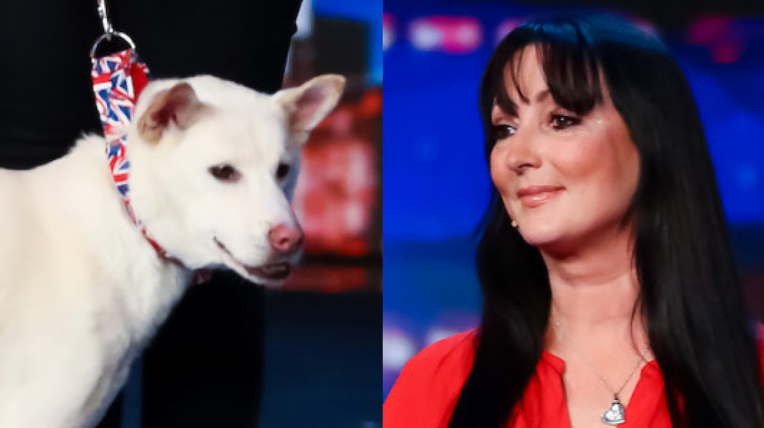 BGT rescue dog Miracle and hero Amanda Leask's incredible heartbreaking story revealed in full