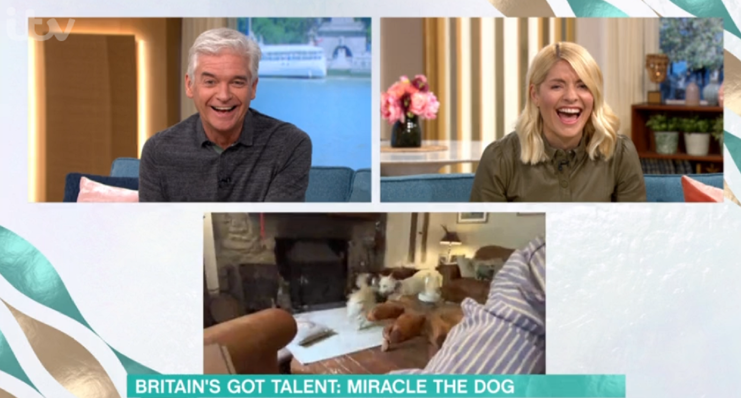 Phillip Schofield and Holly Willoughby in hysterics on This Morning as BGT dog Miracle runs riot during interview