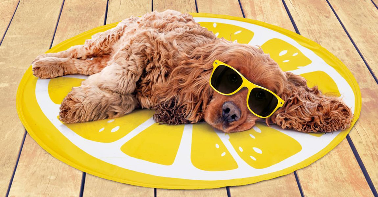 B&M's £5 dog cooling mat is back just in time for the hottest day of the year