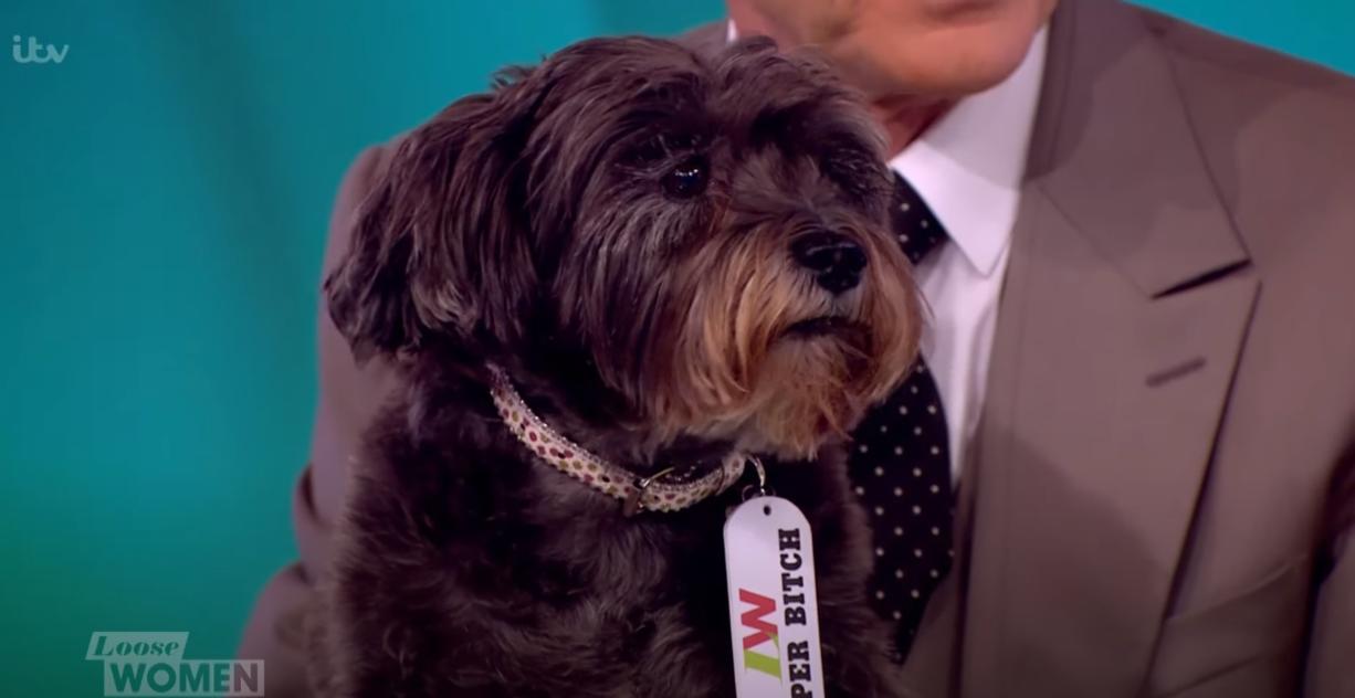 Paul O'grady dog Olga