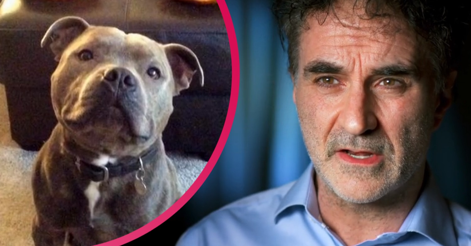 The Supervet viewers relieved as Noel Fitzpatrick saves puppy who stopped breathing
