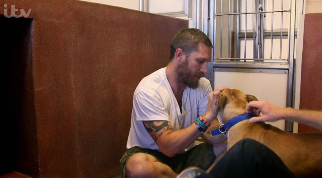 Tom Hardy on For the Love of Dogs