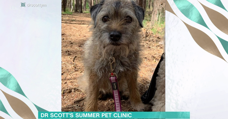 Dr Scott Miller dog