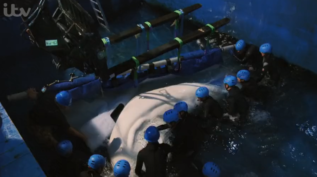 John Bishop's Great Whale Rescue