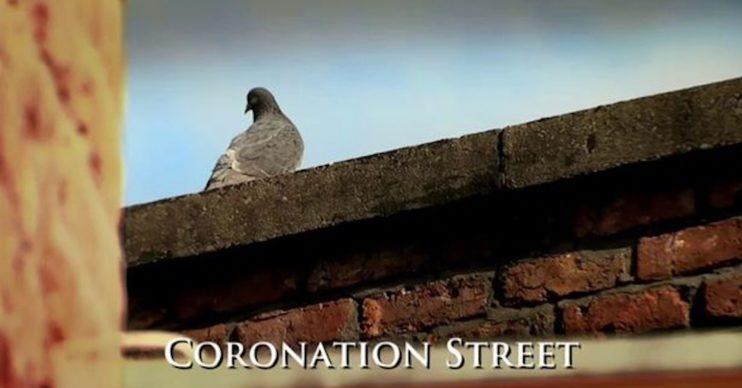 CORONATION STREET PIGEON PANDEMIC