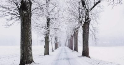 The snow in winter (Credit: Pexels)
