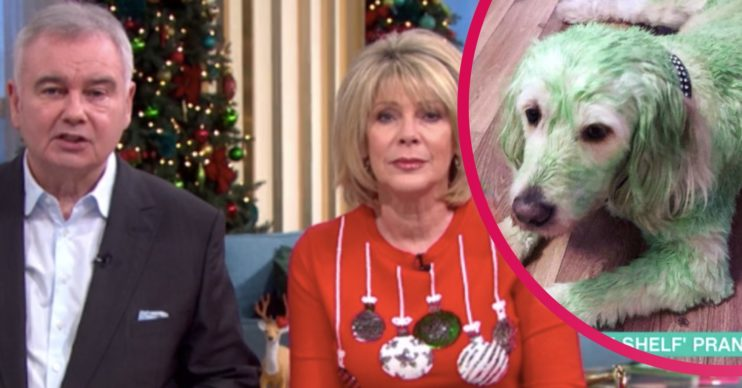 green dog on this morning with eamonn holmes and ruth langsford