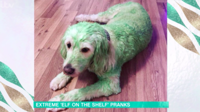 this morning viewers react to green dog