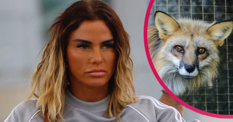 katie price fox fur