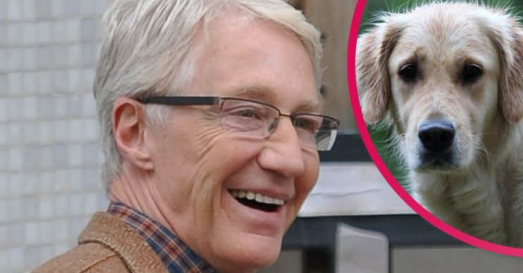 paul o'grady dogs battersea