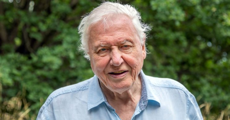 David Attenborough A Perfect Planet