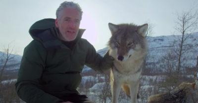 gordon buchanan with a wolf