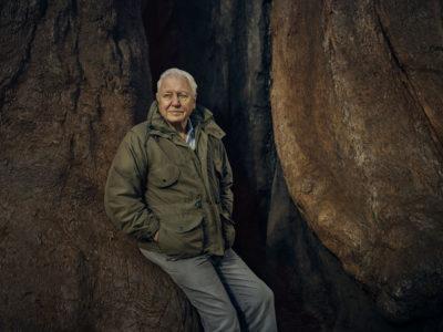 What is David Attenborough's favourite animal?