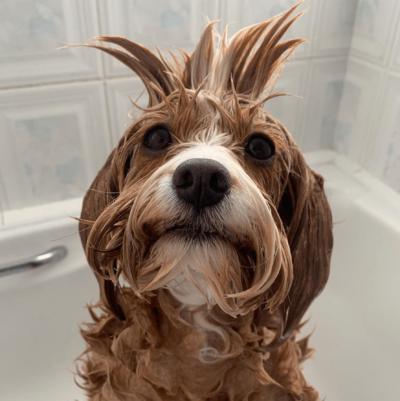 puppy in the bath