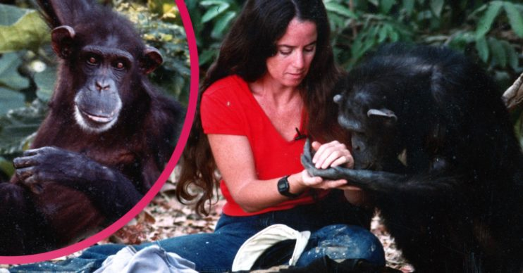 Lucy, the Human Chimp and Janis carter composite