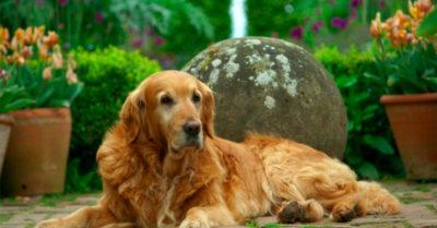 Monty Don's dog Nigel