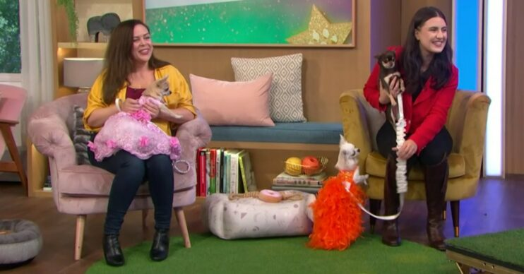 Chihuahua beauty pageant take splace on This Morning with dogs seen in tutus and other outfits