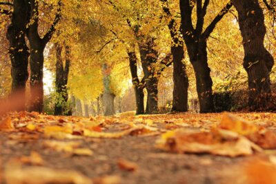 Autumnal scene with golden leaves on the ground